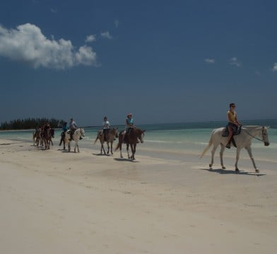 Grand Bahamas Horseback Riding