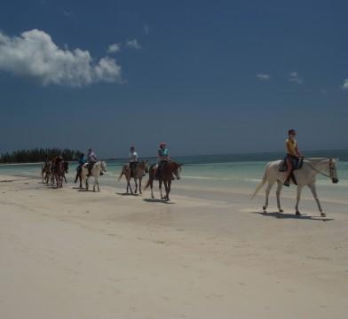 Grand Bahamas Horseback Riding