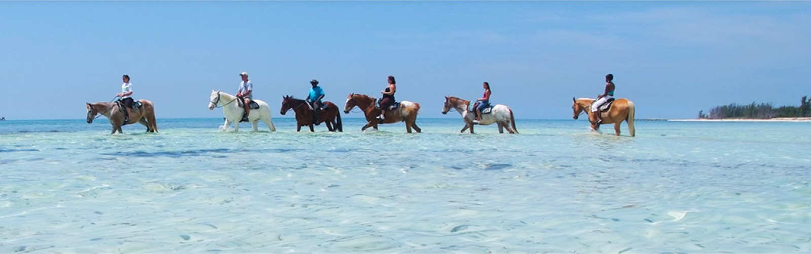 Horses trotting through the water