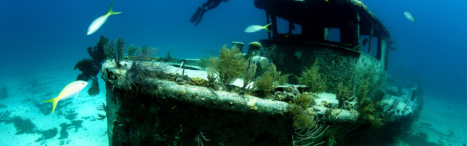 Sunken ship with divers on Grand Bahama Island
