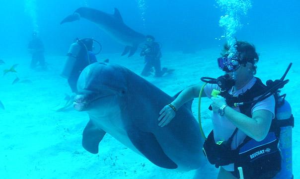 Scuba diver petting a dolphin underwater