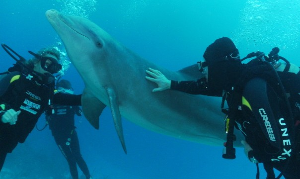 Diver reaching out to touch a dolphin