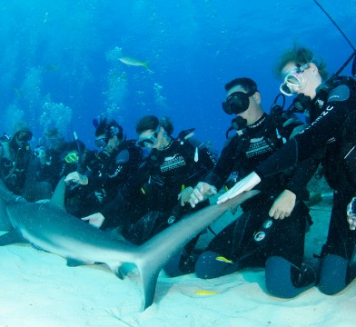Diviers reaching out to touch a shark