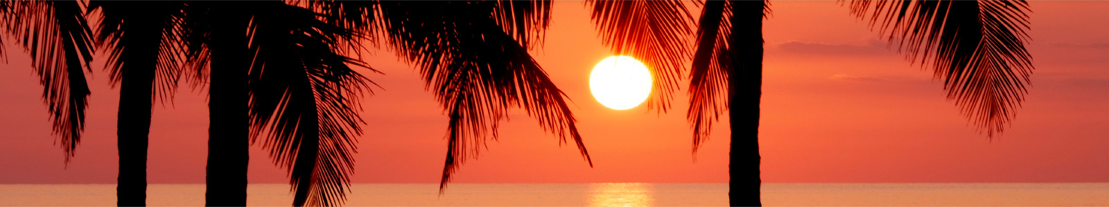 Grand Bahama Island sunset with Palm Trees
